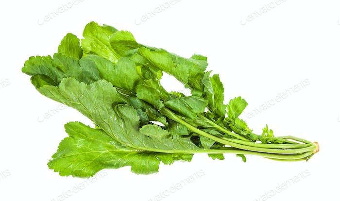 Zweig frischer kaukasischer Gartenkresse (tsitsmati)