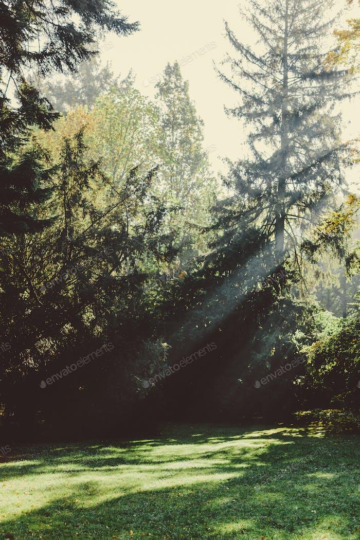 Sonne scheint durch Bäume im Park.
