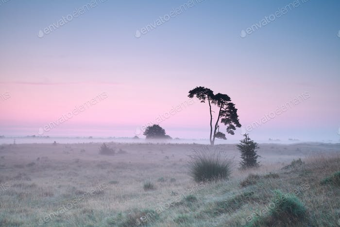 serene misty sunrise on meadow
