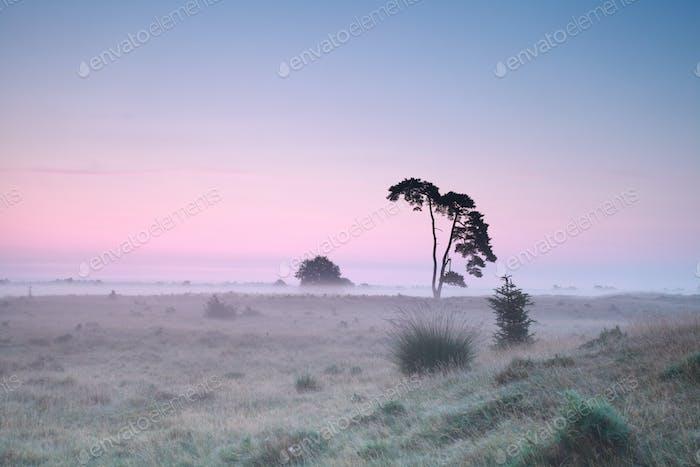 serene misty sunrise on meadow
