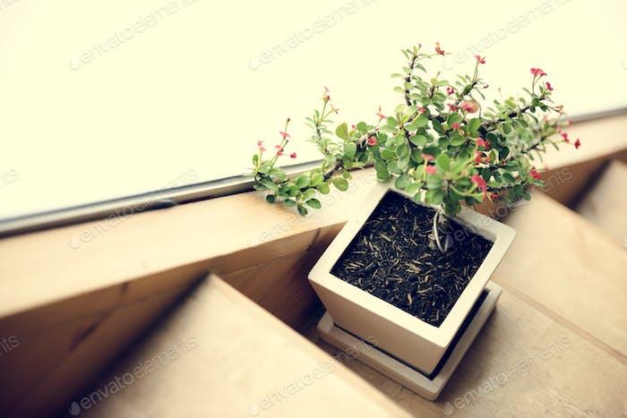 Zimmerpflanze und Holztreppe