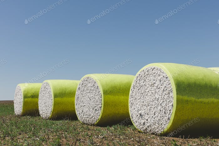 Harvested cotton bales wrapped in yellow plastic vinyl