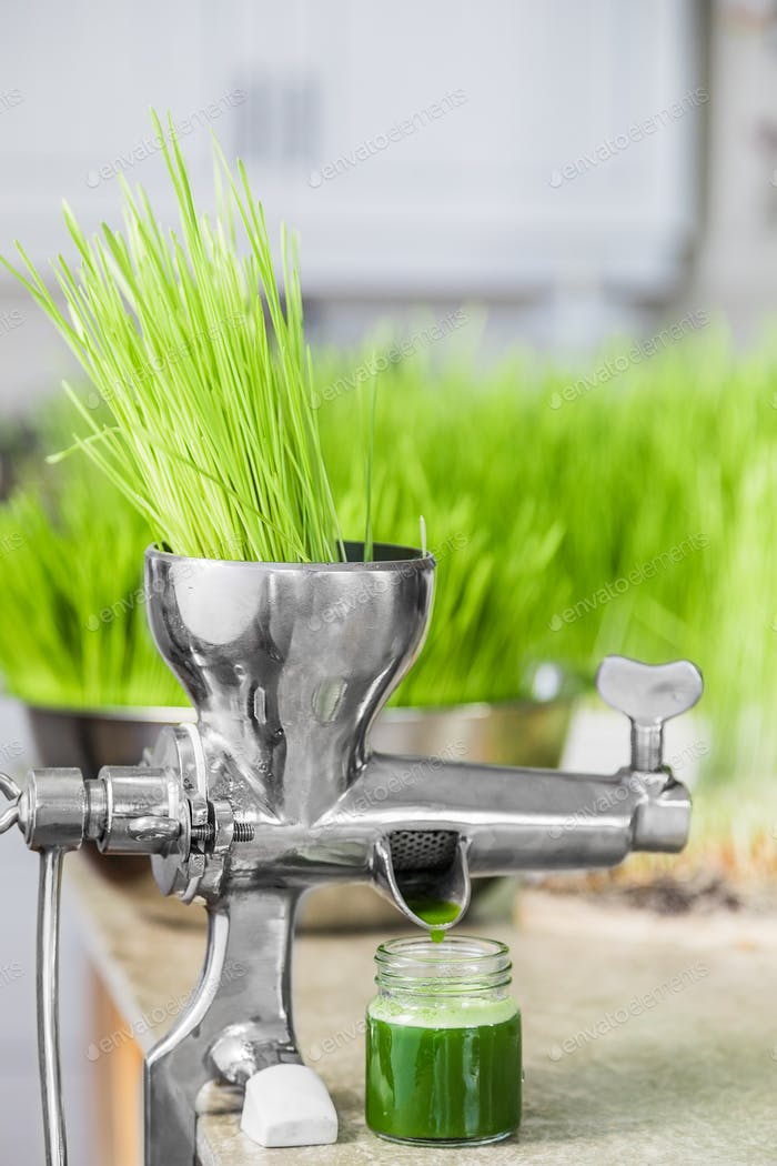 Extraction of Wheatgrass in Action on the Kitchen Countertop usi