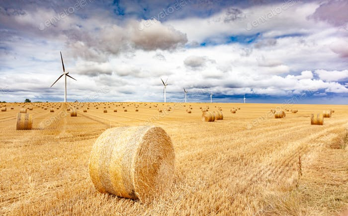 Windmill turbines in a agricultural landscape with fields and meadows.