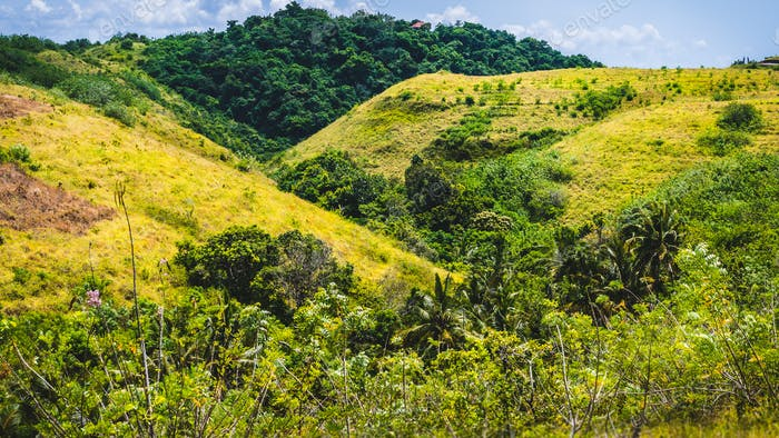 Yellow Hills with some Jungle between, Nusa Penida Island, Bali, Indonesia