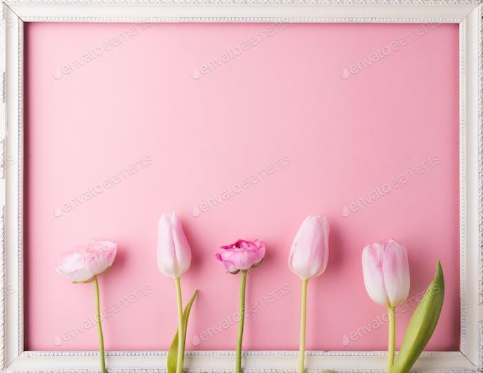 Rosa Blumen auf einem rosa Hintergrund.