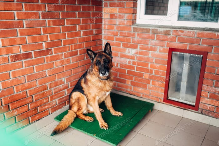 Dog  examining in veterinary clinic, no people