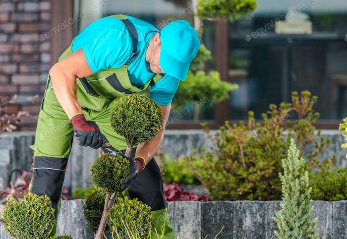 Maintaining Garden Trees Shape