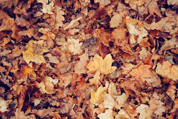 Dry fallen leaves on the ground