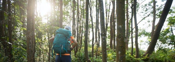 Wandern im tropischen Regenwald