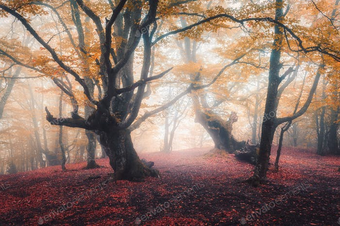 Beautiful fairy forest in fog in autumn. Enchanted trees