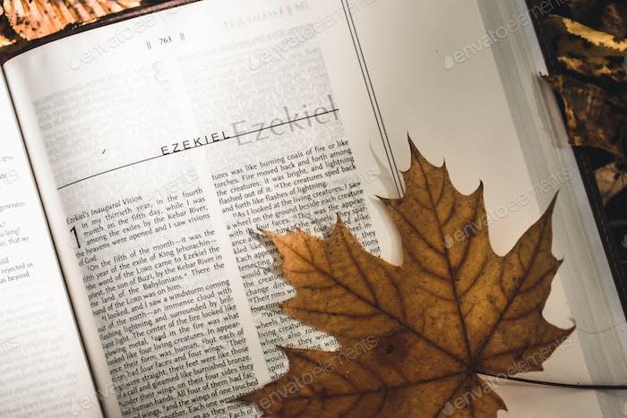Heilige Bibel auf gefallenen Herbstblättern