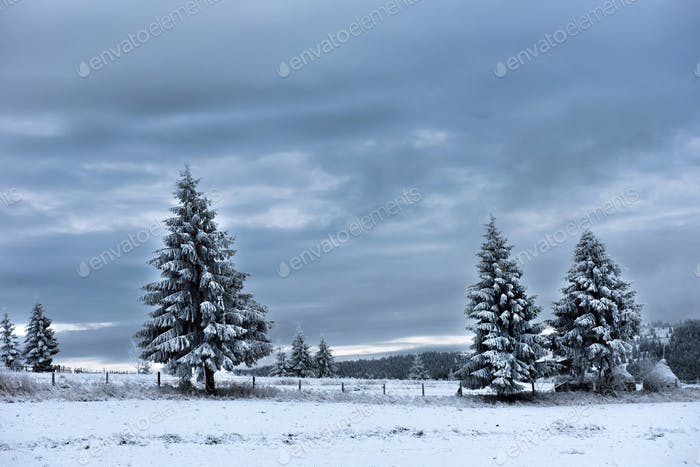 Trees covered with hoarfrost and snow in mountains. Christmas greetings
