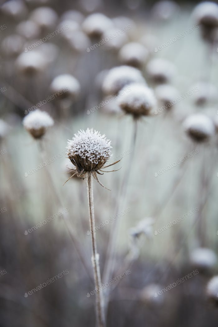 Close up of plants in the garden in winter at Le Manoir aux Quat'Saisons, Oxfordshire.