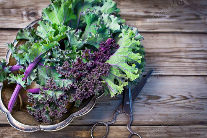 Red kale leaves and scissors
