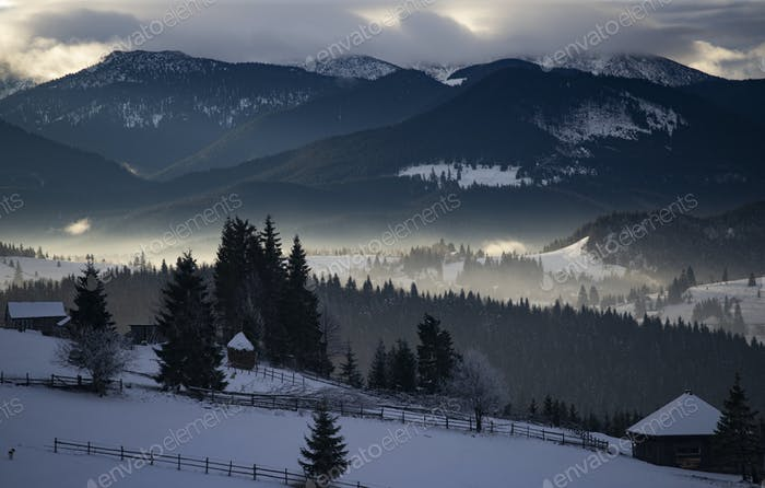 Winter forest in dramatic sunrise in the Carpathians, Romania.