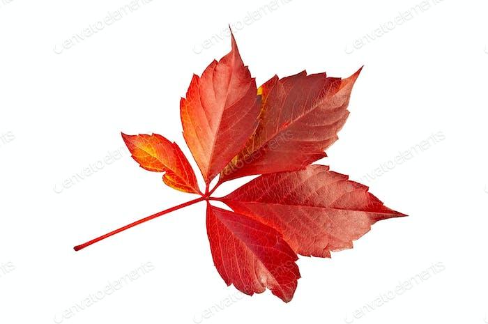 Leaf red grape decoration