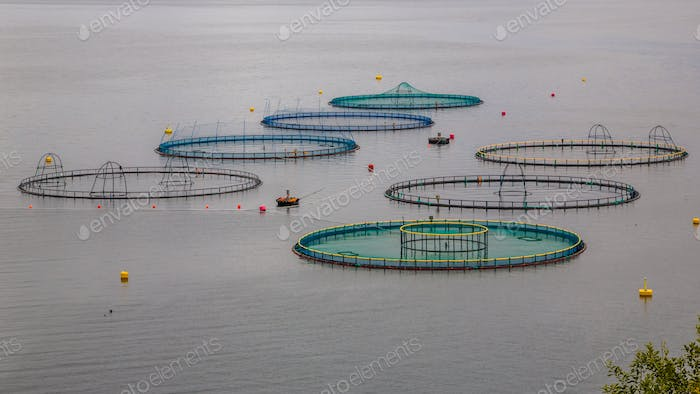 salmon farm in Norway