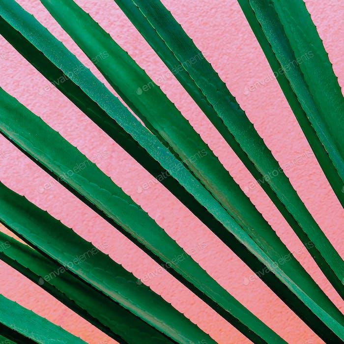 Plant on pink. Tropical design minimal fashion art Green lover