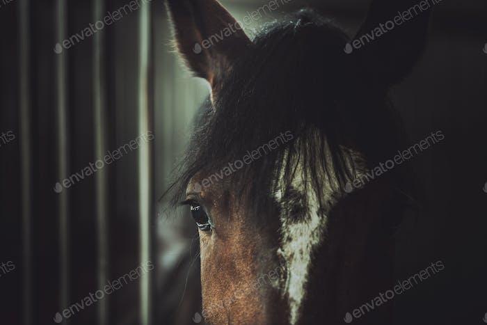 Thema Pferdegrausamkeit