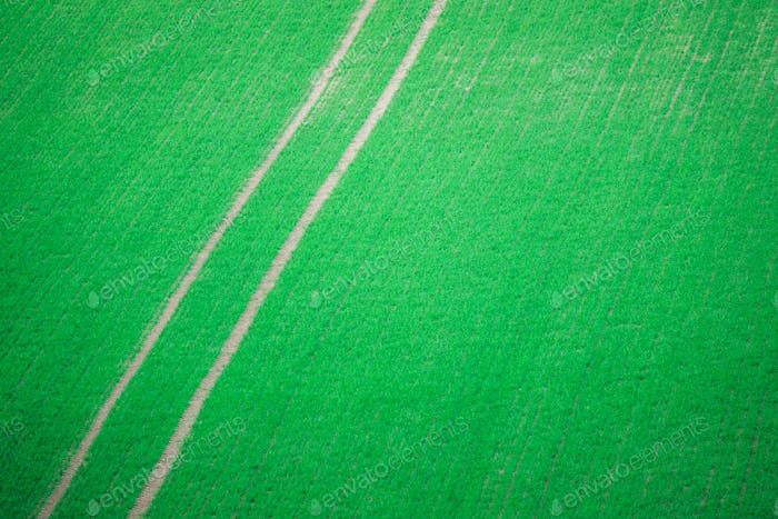 Tractor Tracks Through Crops