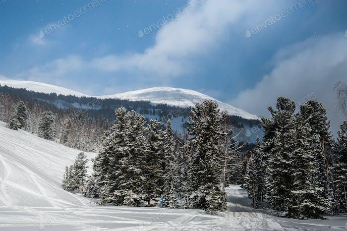 hermoso Horizontal de invierno en el Bosque