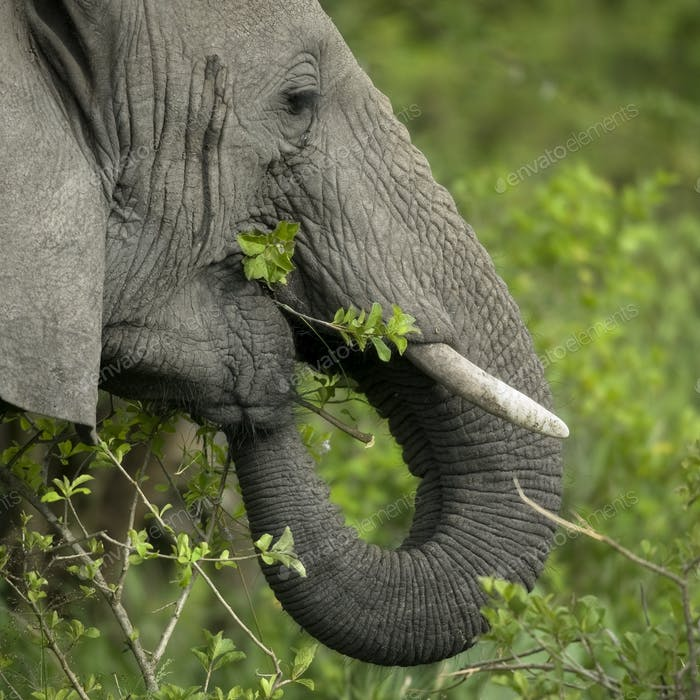 Close-up on a elephant's head