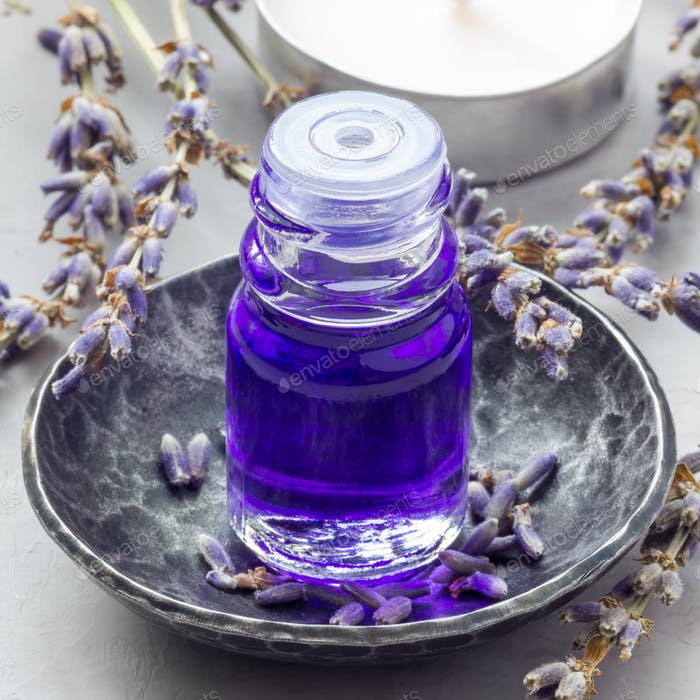 Lavender oil in glass bottle with lavender flowers on background, square