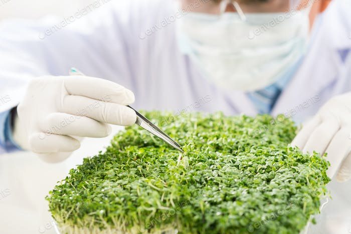 Checking Quality of GMO Plants