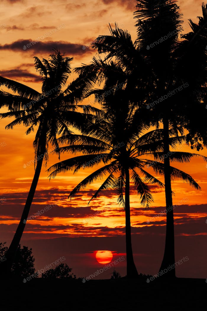palm trees and beautiful sky landscape. Travel, Tourism, vacation concept background.