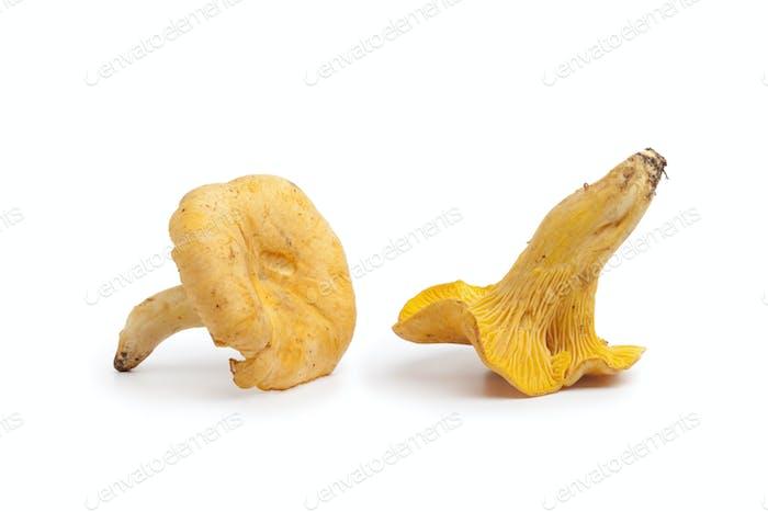 Fresh yellow chanterelles