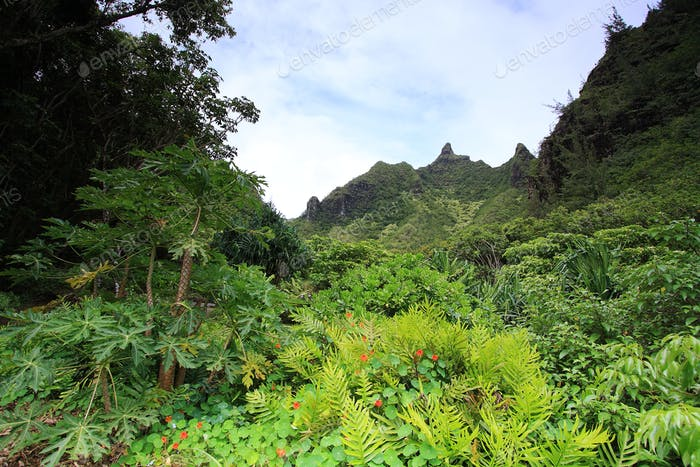 Views from Limahuli gardens, Kauai island