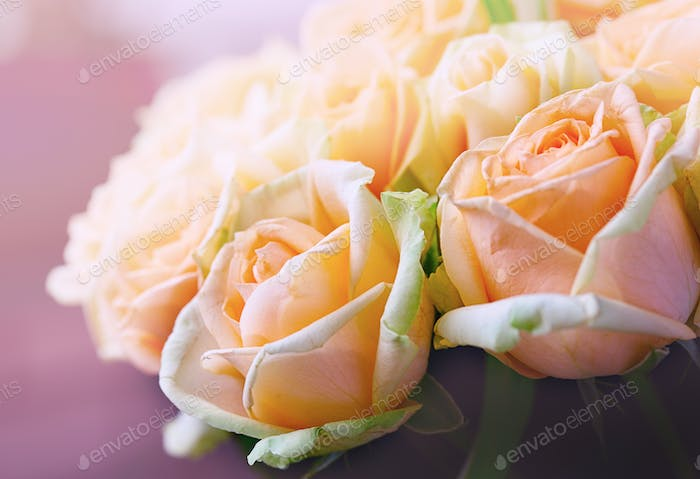 Natural pastel roses background