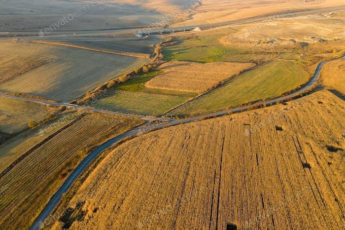 Luftlandwirtschaftliche Landschaft. Plantagenfeld bereit für die Ernte. Über Ansicht von einer Drohne