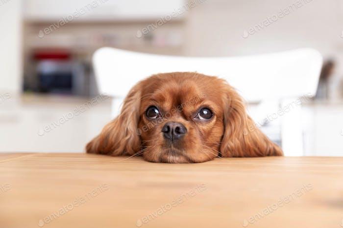 Perro lindo detrás de la mesa de la cocina