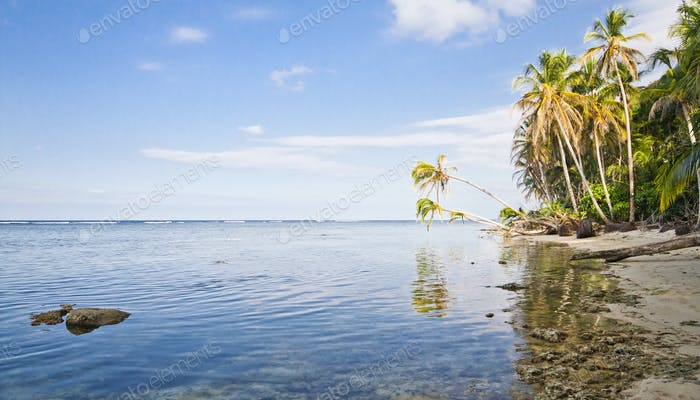 Palm Trees Hang Over the Caribbean Sea in Costa Rica