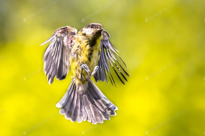 Bird in flight on bright green garden background