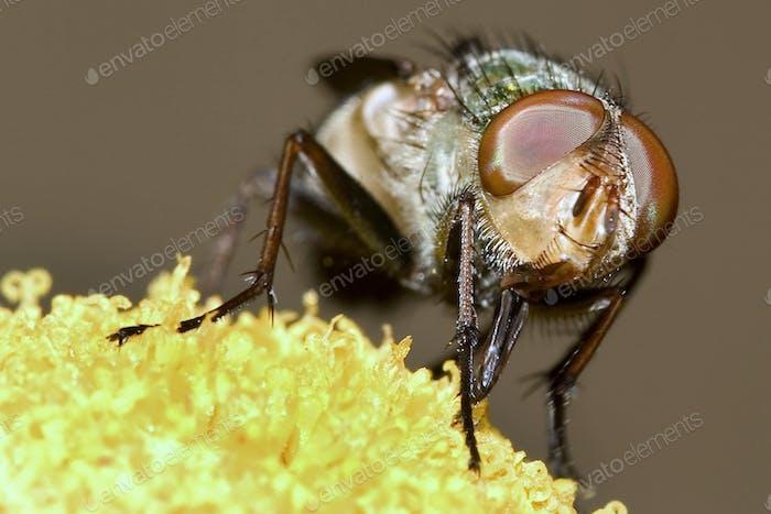 Fly, Guadarrama National Park, Spain