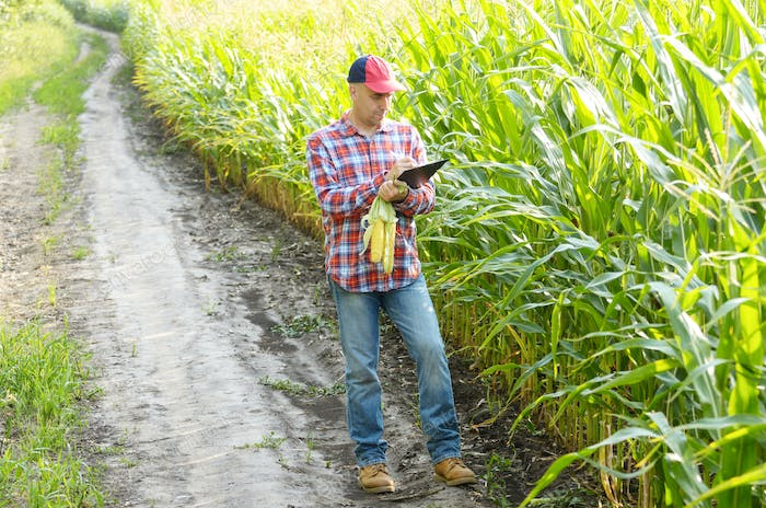 Farmer in cap with clipboard inspecting corn at field somewhere