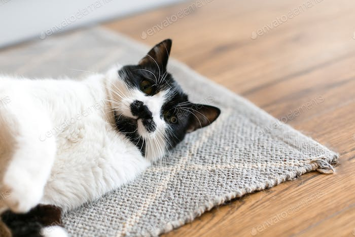 Cute cat lazy lying on stylish rug in the kitchen, top view