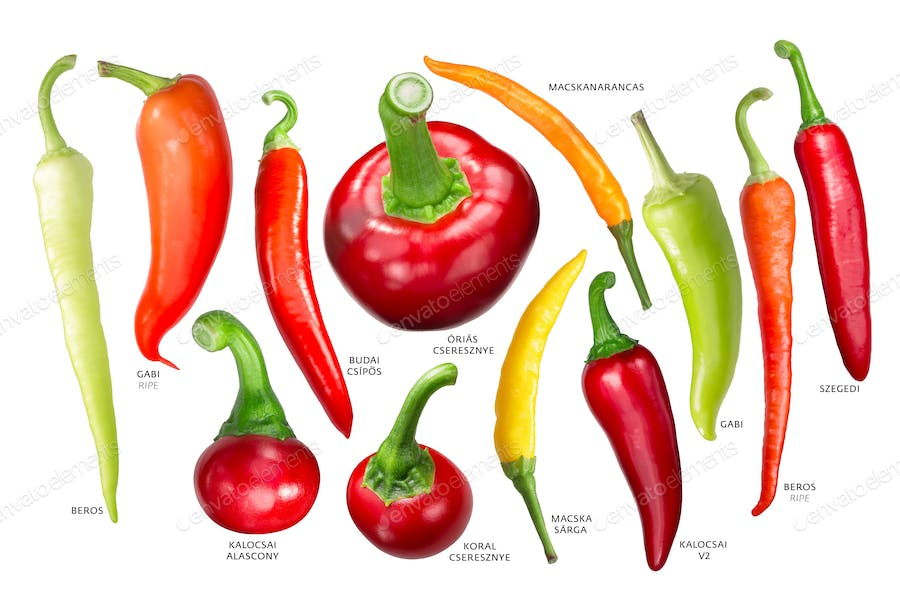 Hungarian paprika peppers, paths photo by maxsol7 on Envato Elements