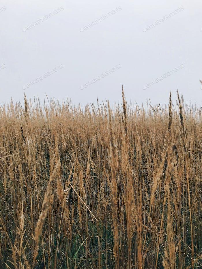 Травы холодным осенним утром в туманном луге