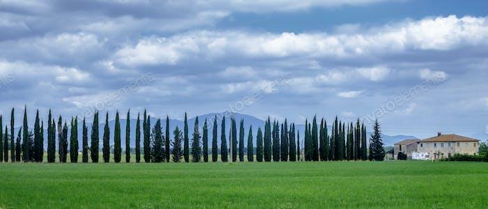 Summer landscape near Volterra, Tuscany