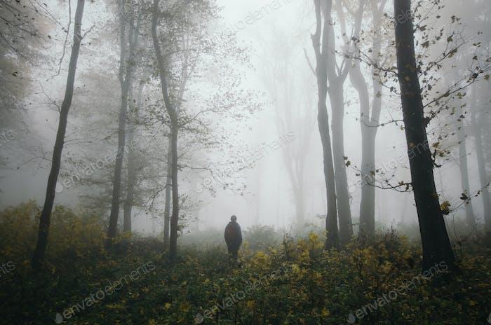 Walk in foggy autumn woods