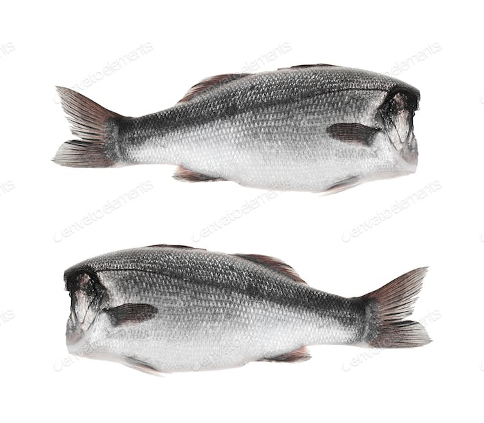 fishes without head on a white background