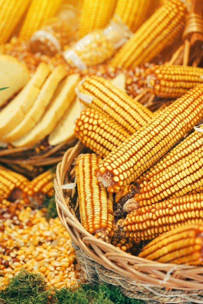 Harvested corn maize crop