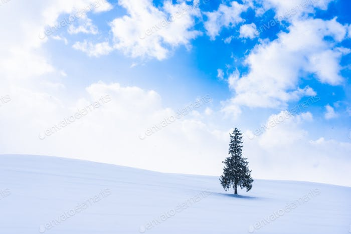 Beautiful outdoor nature landscape with alone christmass tree in