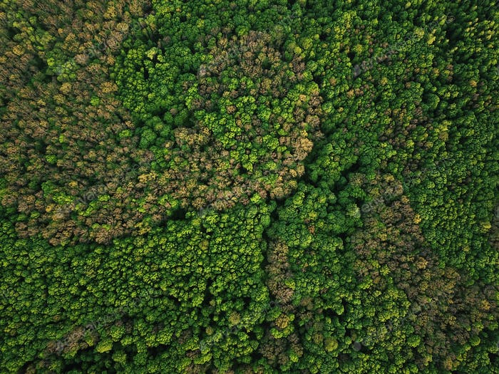 Aerial view of the green mixed deciduous-coniferous forest