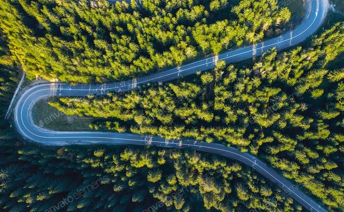 Luftaufnahme von einer Drohne von Serpentine Straße durch lebendigen grünen Kiefernwald