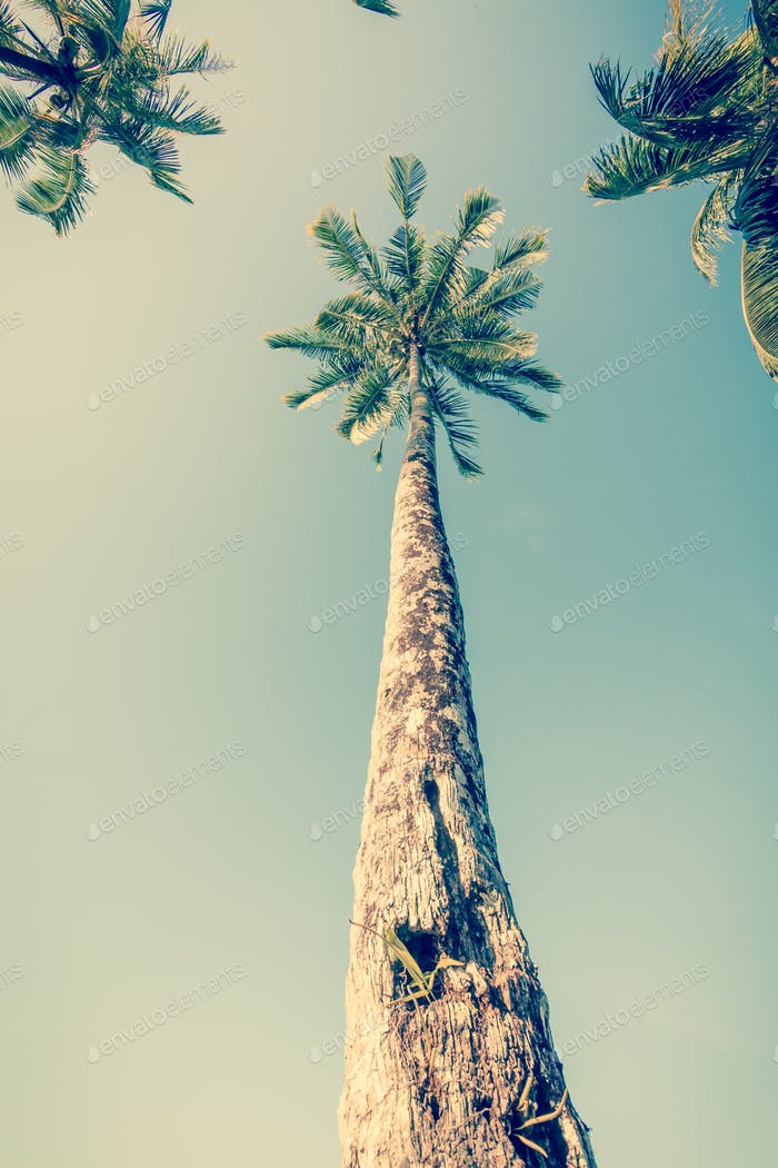Vintge Palm Trees. palm trees in vintage style. Palm trees  vint